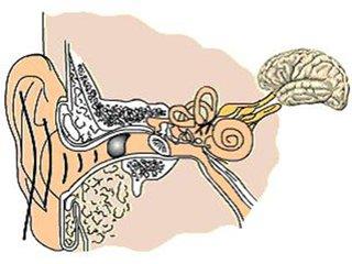 在岳阳鼓膜穿孔了怎么办?